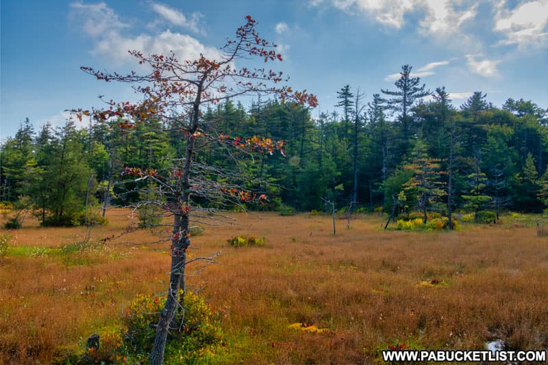 Late summer at Spruce Flats Bog in the PA Laurel Highlands.