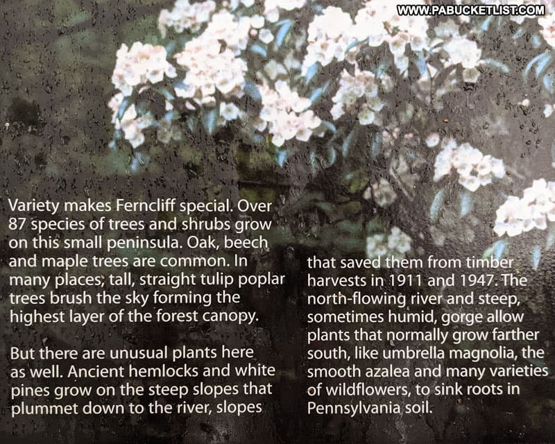 Description of plant species on Ferncliff Peninsula.