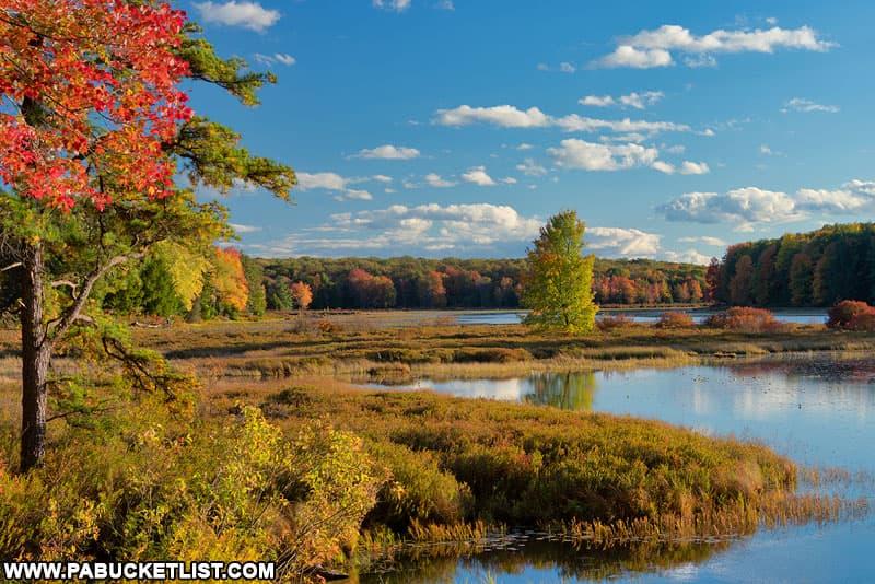 Red and gold fall foliage surrounding Black Moshannon Lake