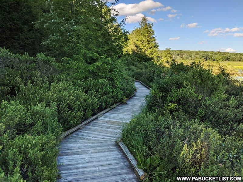 The Bog Trail at Black Moshannon State Park.