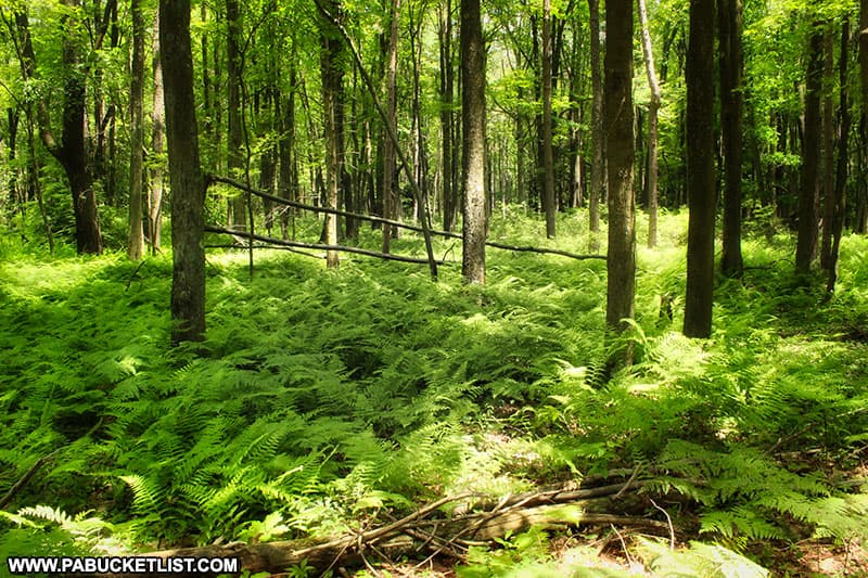 The Moss-Hanne Trail at Black Moshannon State Park.