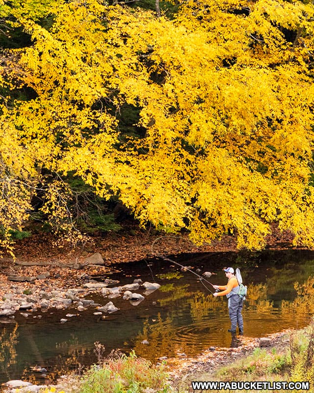 Fly fishing in October at Laurel Hill State Park.