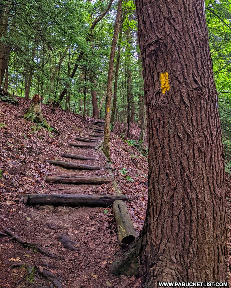 The Hemlock Trail at Laurel Hill State Park.