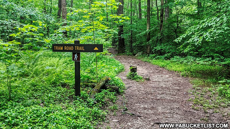 The Tram Road Trail Head at Laurel HIll State Park.