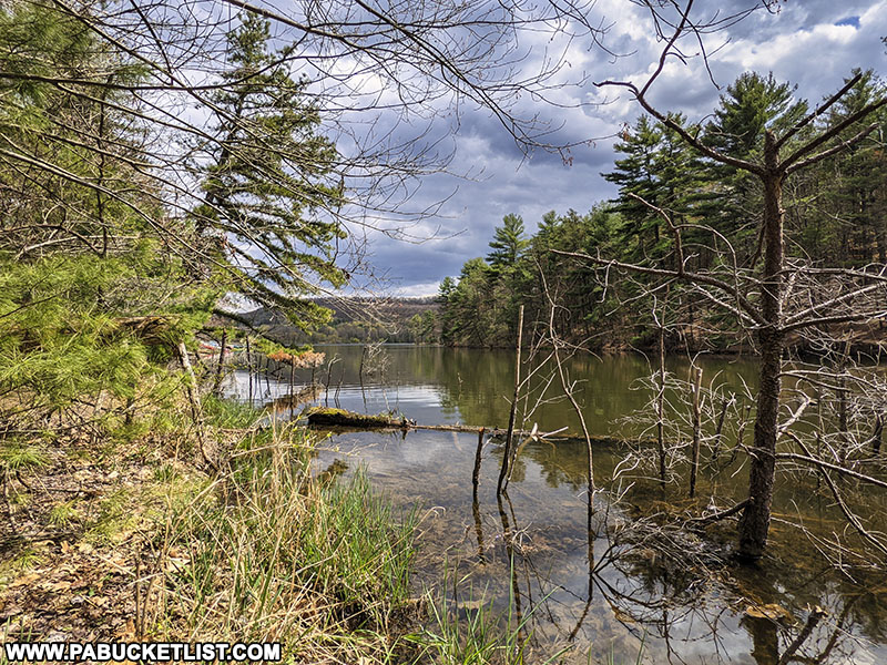 Springtime along the Colyer Lake Loop Trail in Centre County Pennsylvania.