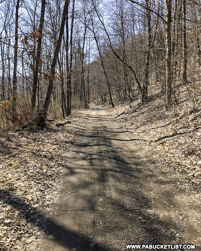 The lower half of the Bayless Paper Mill Trail at Austin Dam Memorial Park in Potter County PA