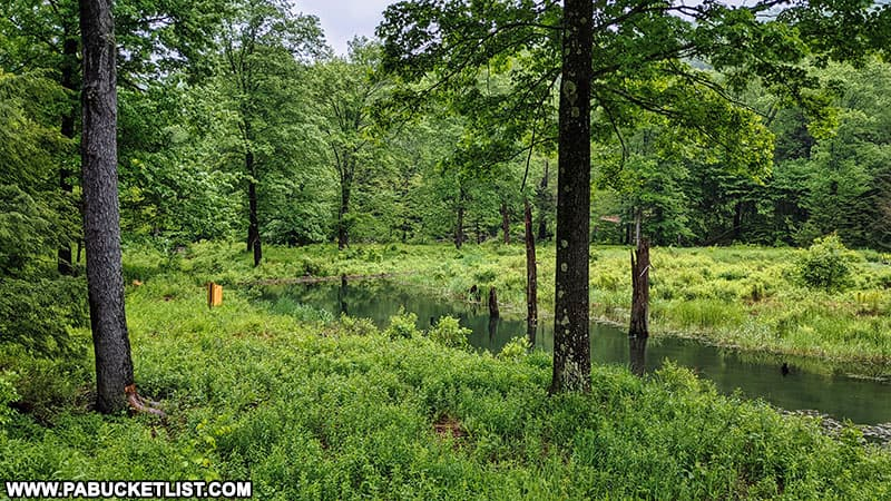 A beaver dam along the trail to Thomas Run Falls on State Game Lands 12 in Bradford County Pennsylvania