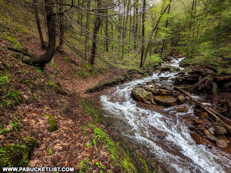The Bradford Falls Trail as it hugs the bank along Falls Creek below Bradford Falls.