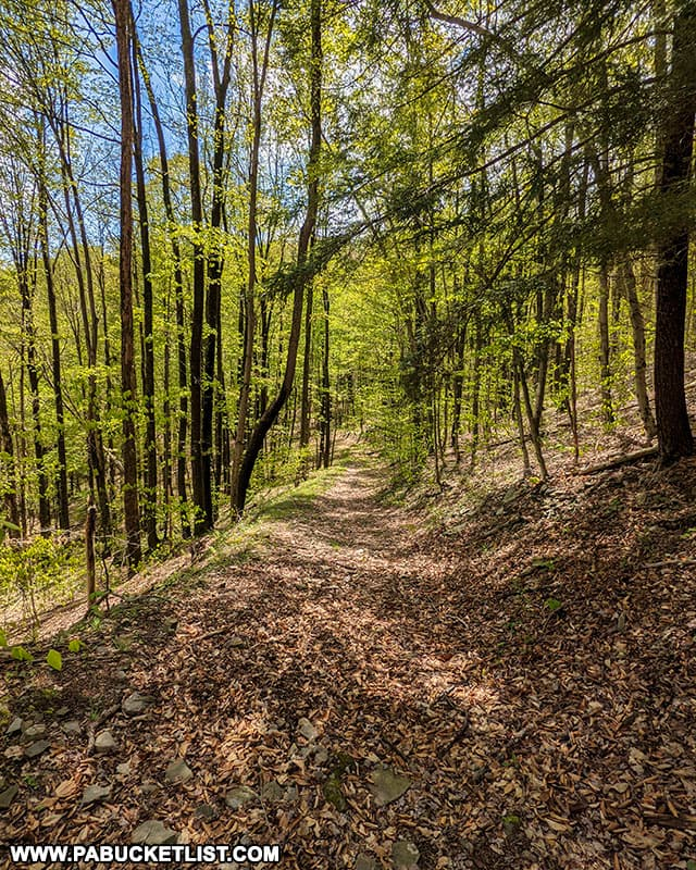 The old forest road that composes much of the Bradford Falls Trail on State Game Lands 36.