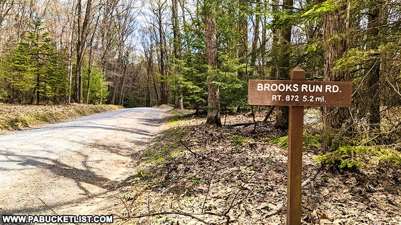 Brooks Run Road in the Elk State Forest.