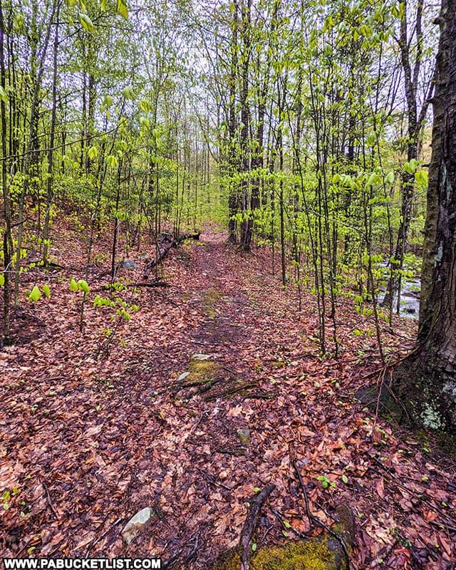 The Deep Hollow Falls Trail in Bradford County Pennsylvania.