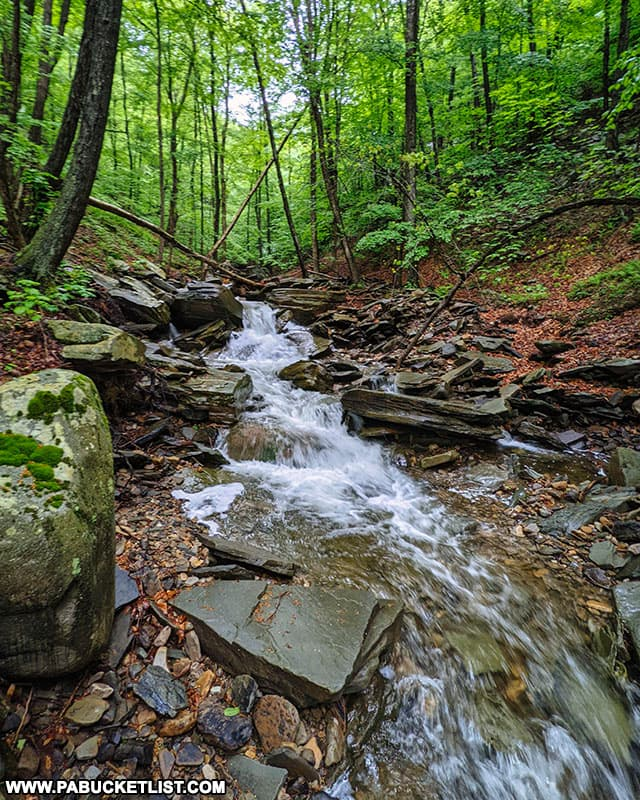 Thomas Run downstream from Thomas Run Falls in Bradford County.