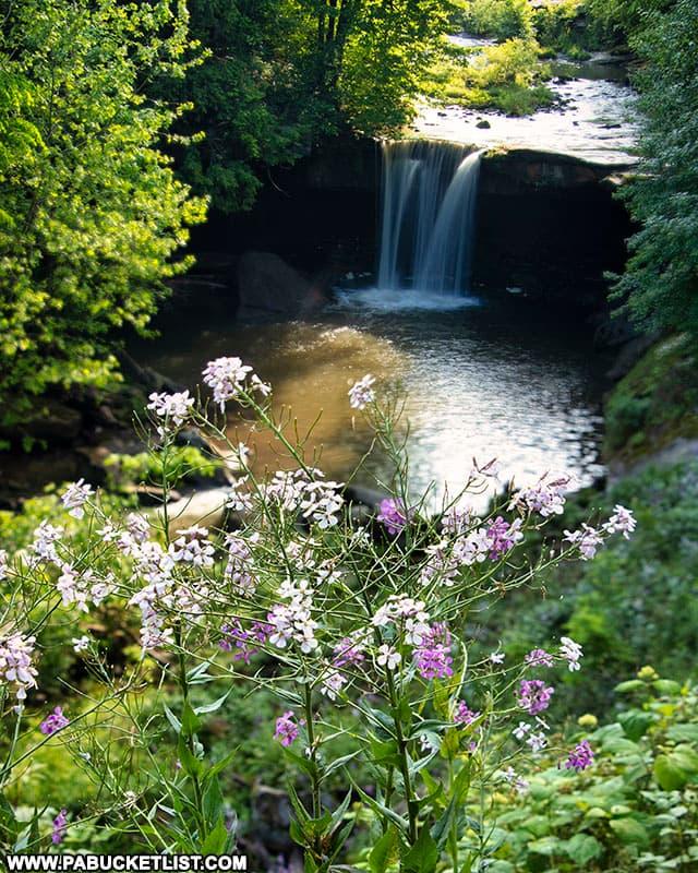 Summer blooms near Big Run Falls at Cascade Park.