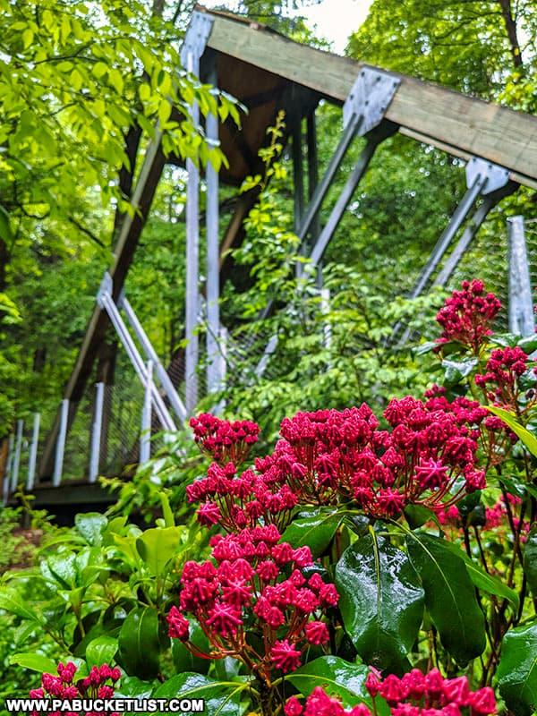 Brilliant blooms near the Eclipse Bridge above Buttermilk Falls in Indiana County.