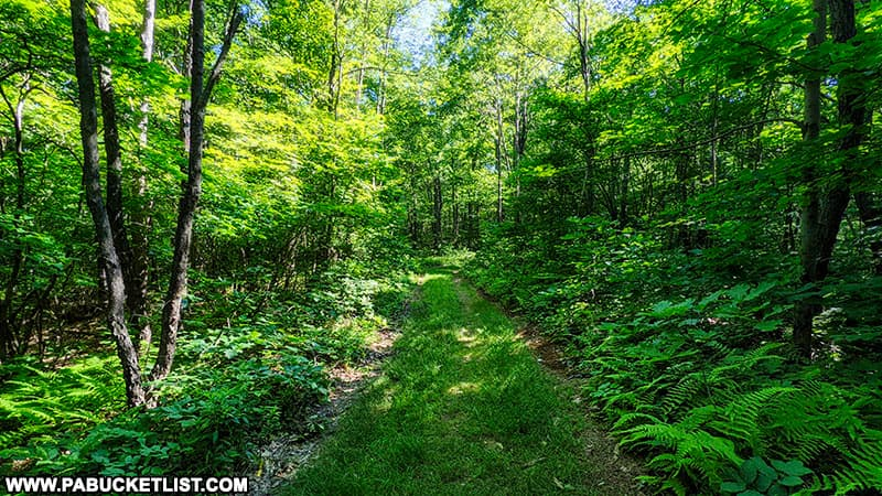County Line Trail in the Gallitzin State Forest.