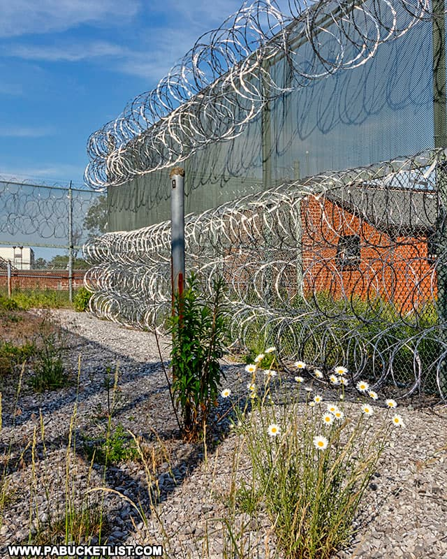 Flowers blooming between fences and razor wire at the former SCI Cresson.