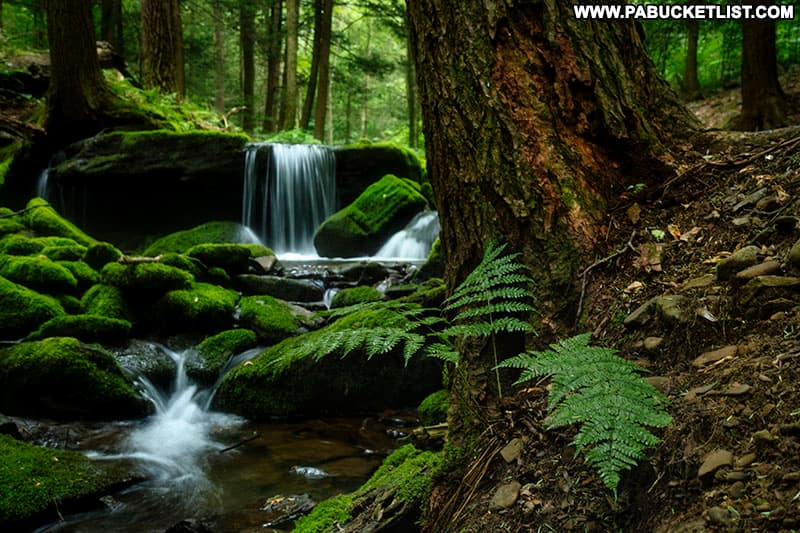Mill Creek Falls on State Game Lands 42 in Westmoreland County on a summer evening.