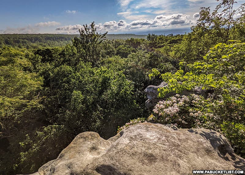 Summer blooms at Beam Rocks Overlook in the Forbes State Forest.