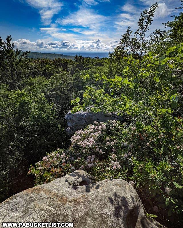 Beam Rocks on a summer morning in Somerset County Pennsylvania.