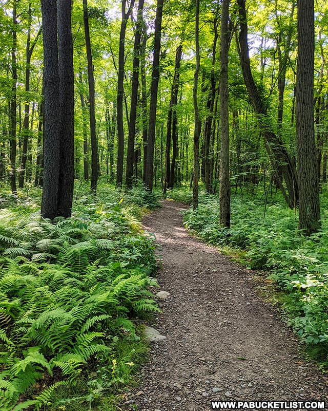 Beam Rocks Trail in the Forbes State Forest on a summer morning in the PA Laurel Highlands.