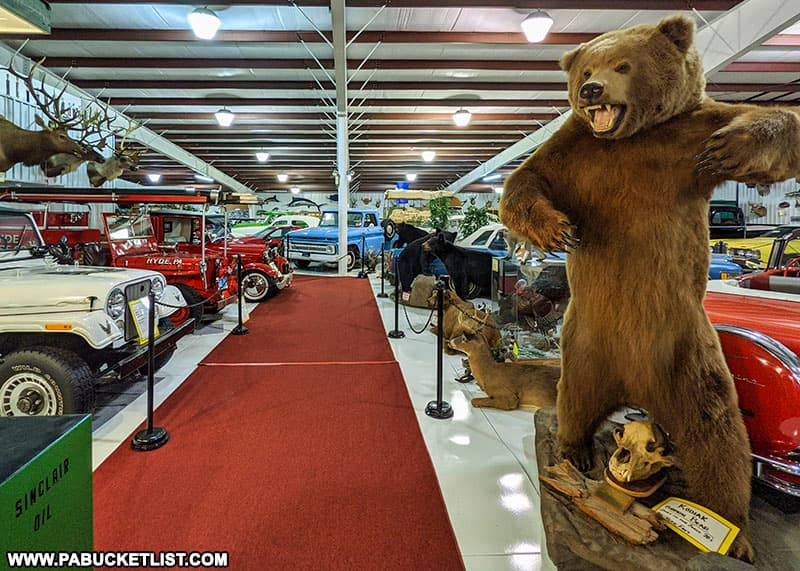 A grizzly bear guarding the showroom at the Grice Museum in Clearfield PA