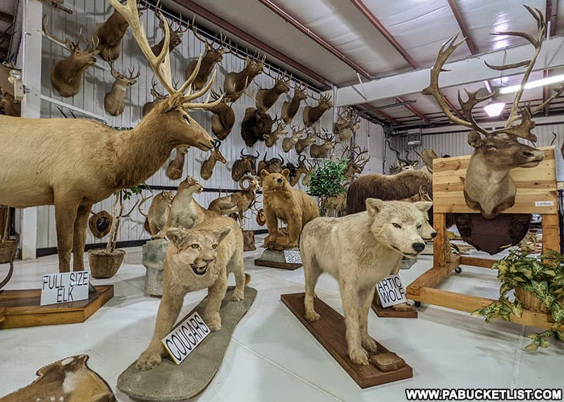 A taxidermy display at the Grice Museum in Clearfield Pennsylvania.