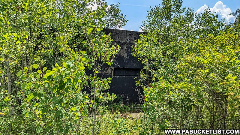 Trees growing up around one of the abandoned nuclear jet engine testing bunkers in the Quehanna Wild Area.