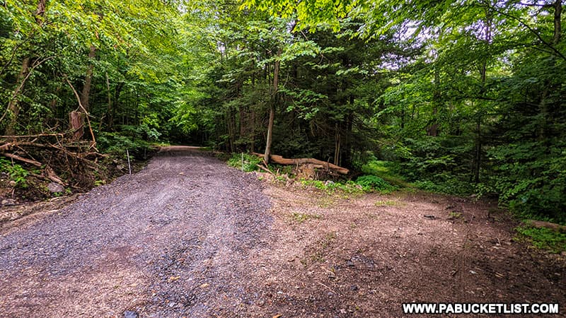 The intersection along the MIll Creek Falls TRail on State Game Lands 42 in Westmoreland County.