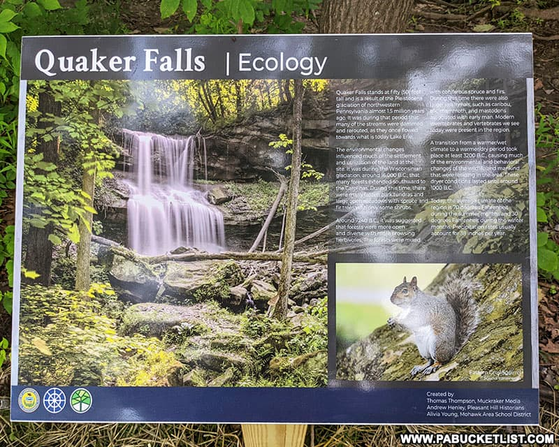 Ecology of the area surrounding Quaker Falls in Lawrence County Pennsylvania.