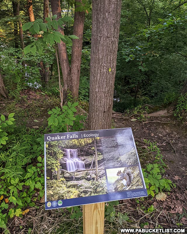 Quaker Falls ecology sign at the top of the unimproved trail leading to its base.