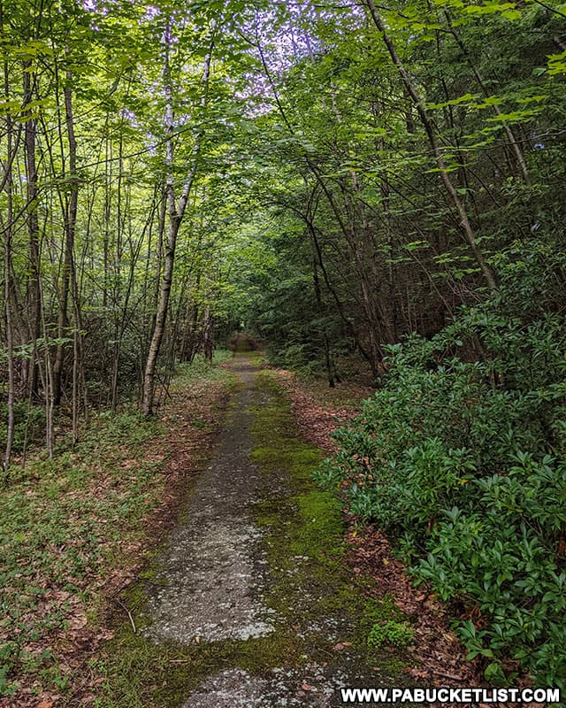 Abandoned road leading to the Quehanna nuclear jet engine testing bunkers in Cameron County Pennsylvania.