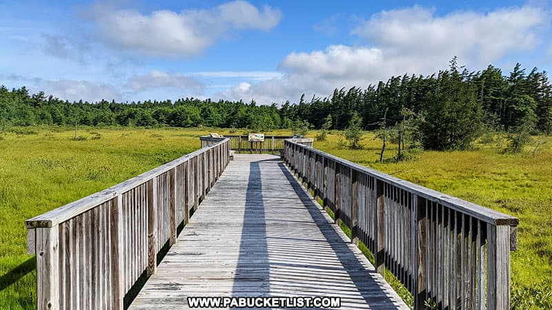 The boardwalk extending out into Spruce Flats Bog in Westmoreland County Pennsylvania.