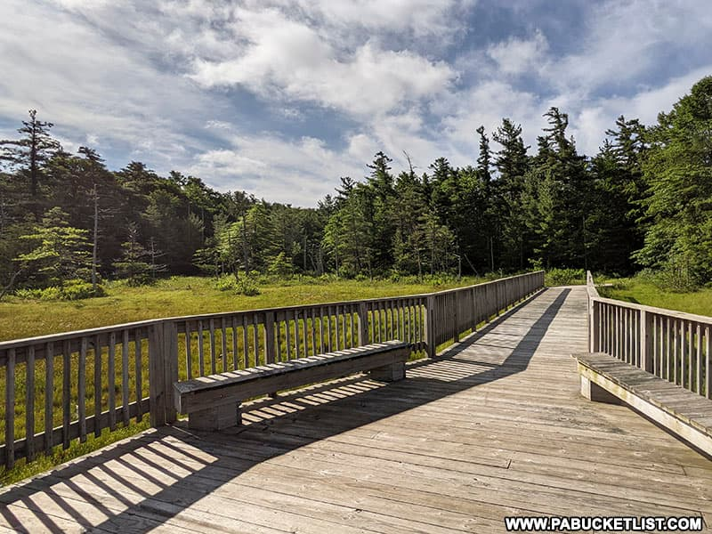 The boardwalk at Spruce Flats Bog in the Forbes State Forest.