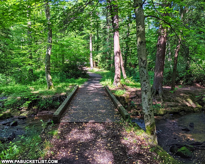 Tree Army Trail at Kooser State Park in Somerset County.