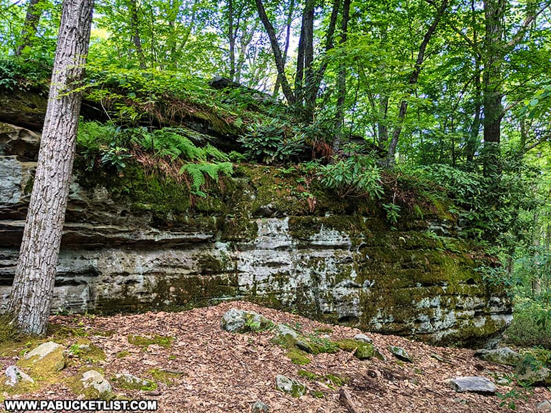 Ferns and moss covering one of the boulders at Beartown Rocks in the Clear Creek State Forest.