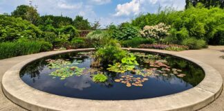 Water lilies on the reflecting pool at the Penn State Arboretum.