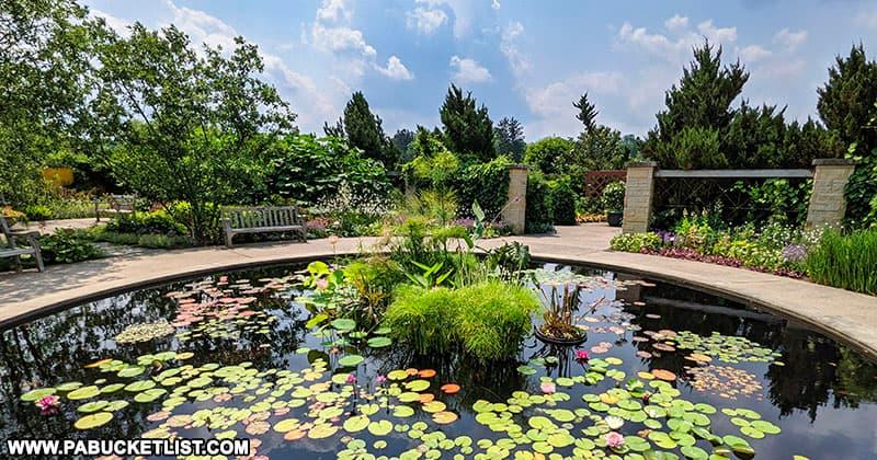 Lotus Pond at the Penn State Arboretum.