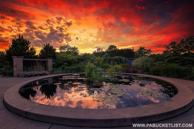 Sunset over the water lily pond at the Penn State Arboretum.