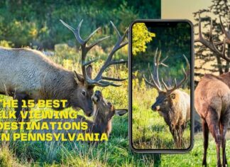 A collage of the 15 best elk viewing destinations in Pennsylvania.