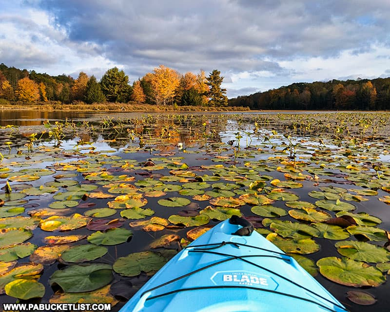 Fall foliage view from the kayak on October 11th, 2021.