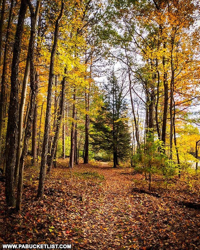 Fall foliage along the Star Mill Loop Trail at Black Moshannon State Park.