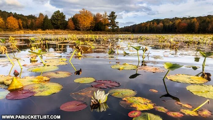 Fall foliage at Black Moshannon State Park 2021 Update