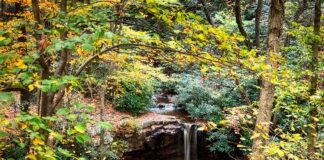 Cole Run Falls surrounded by fall foliage.