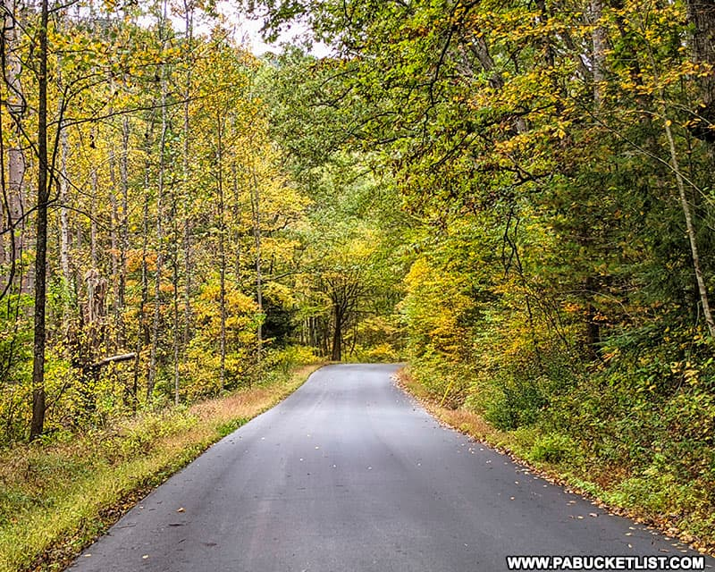 Fall foliage views along Kettle Creek Road on October 12th, 2021.