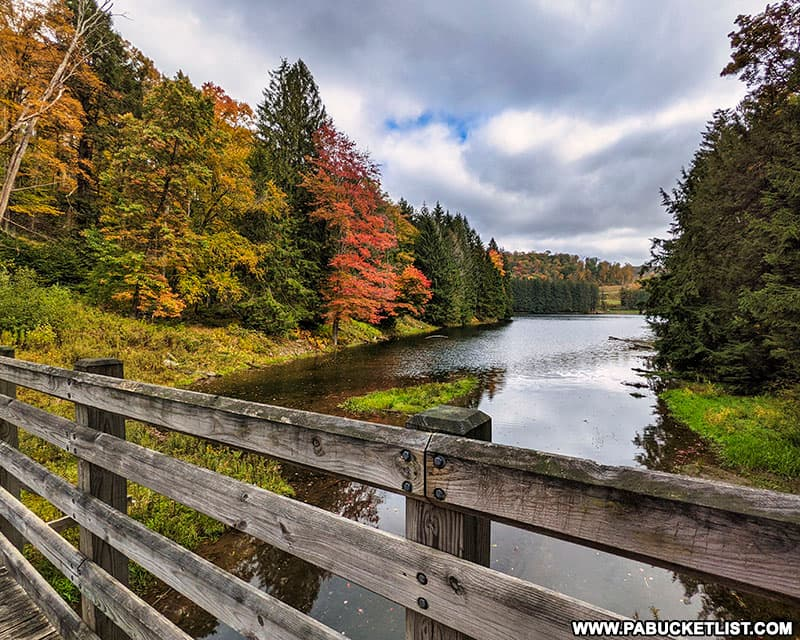 Fall foliage along the Marilla Bridges Trail in McKean County, PA.