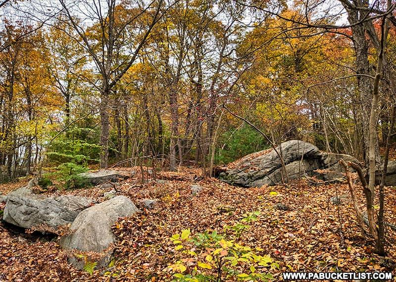 A boulder field near Red Run Gorge Vista in the Quehanna Wild Area.