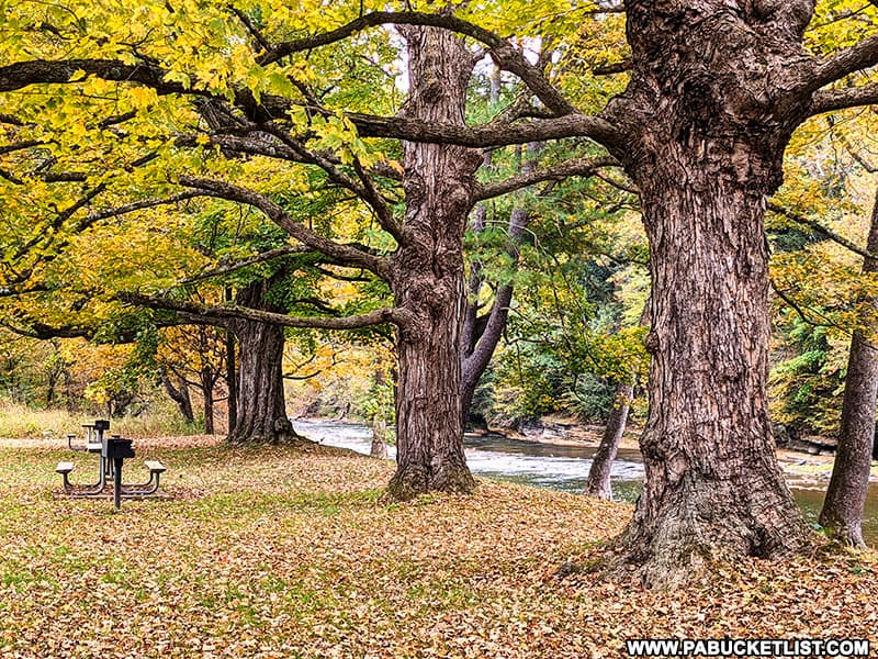 Fall foliage at the 40 Maples picnic area at Sinnemahoning State Park.
