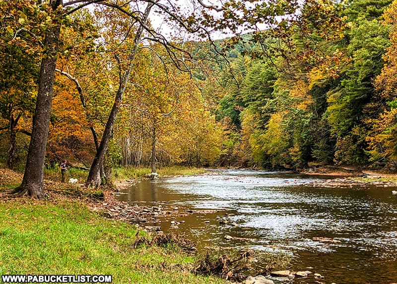Fall foliage around the 40 Maples picnic area at Sinnemahoning State Park on October 12th, 2021.