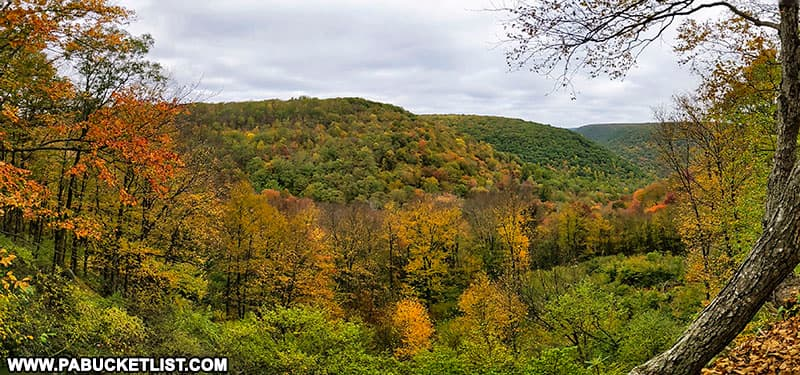 Fall foliage at Teaberry Trail Vista in the Quehanna Wild Area on October 12th, 2021.