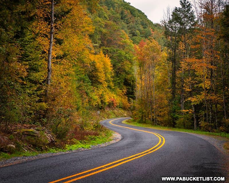 Fall foliage along Wykoff Run Road on October 12th, 2021.